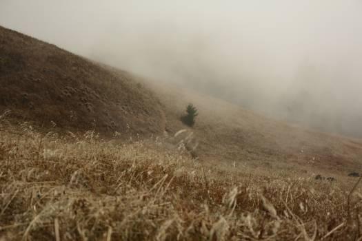 Wheat Knoll Dune #380143