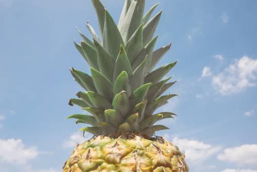 Pineapple Edible fruit Fruit #380475