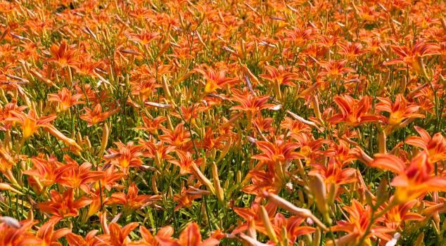 Vascular plant Plant Woody plant #380571