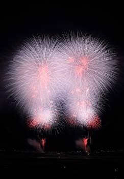 Firework Explosive Fireworks Free Photo