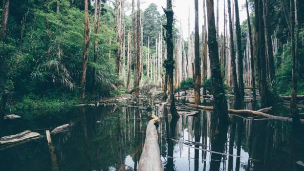 Swamp Wetland Land Free Photo