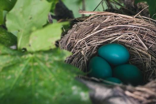 Nest-egg Device Easter #380770