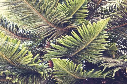 Gymnosperm Spermatophyte Vascular plant #381006