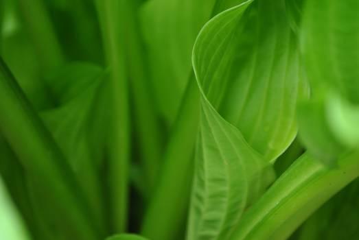 Plant Parsley Fractal Free Photo