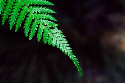 Fern Plant Forest #381248