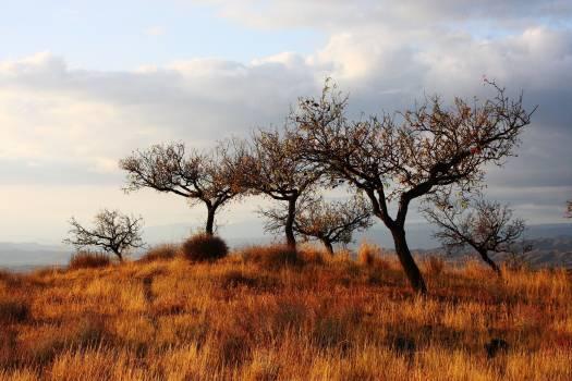 Tree Sky Landscape #381439