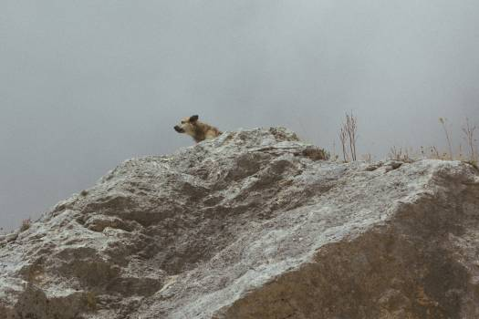 Bighorn Mountain Mountain sheep #381756