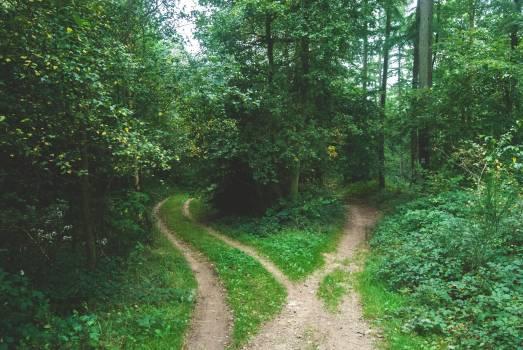 Maze Tree Forest #381793
