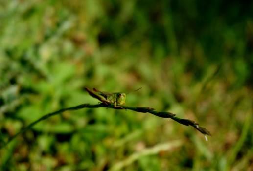 Insect Arthropod Walking stick #381846