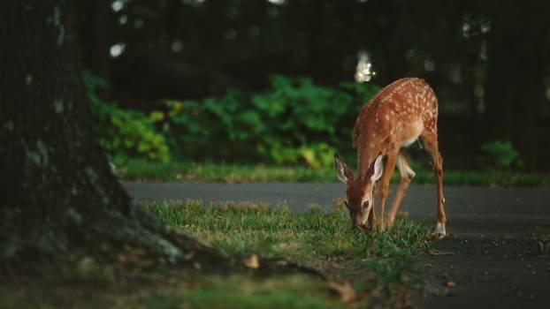 Buck Antelope Deer Free Photo