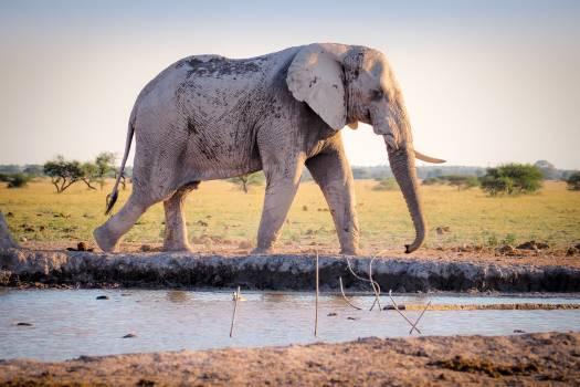 Animal elephant nature water #38225