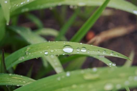 Plant Dew Leaf Free Photo