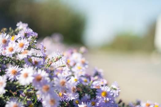 Flower Herb Plant #382422
