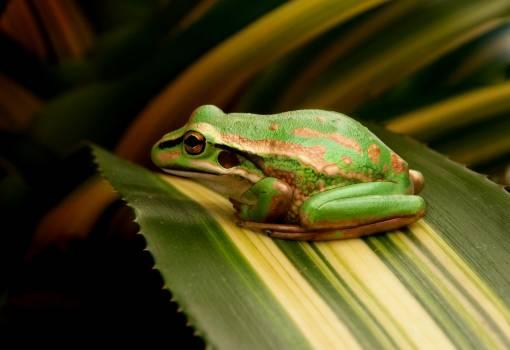 Tree frog Frog Amphibian #382587