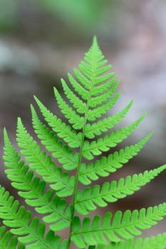 Fern Plant Forest #382663