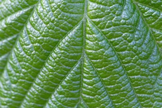 Plant Tree Leaf #382704