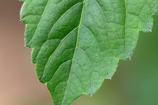 Tree Plant Leaf #382915