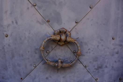 Arthropod Invertebrate Horseshoe crab Free Photo