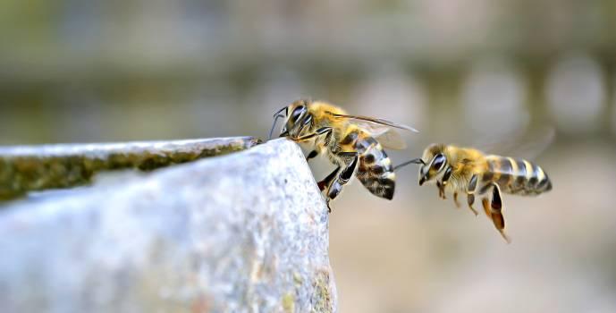 Wasp Insect Arthropod #383364
