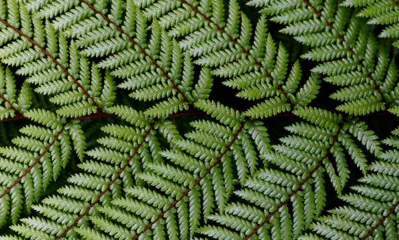 Fern Plant Forest #383491