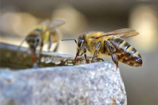 Insect Wasp Arthropod Free Photo