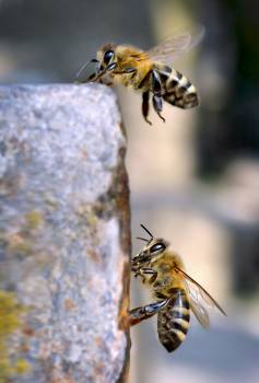 Wasp Insect Arthropod #383530
