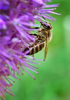 Insect Bee Wasp #383577