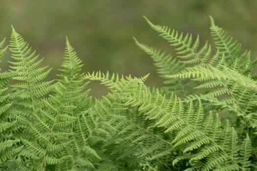 Fern Plant Forest #383700