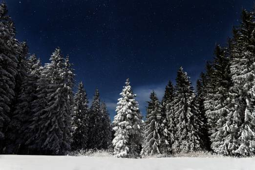 Green Tree Full of Snow #38374