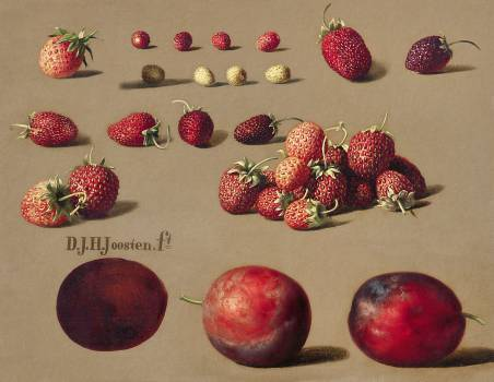 Strawberries and plums (1828–1882) by Dirk Jan Hendrik Joosten. Original from The Rijksmuseum.  #383920
