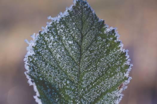 Frozen icy winter leaf #383934