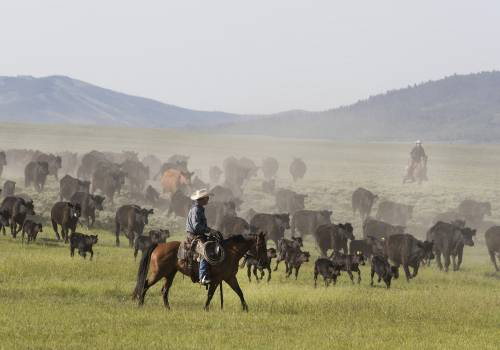 Ranch manager Mark Dunning oversees a roundup at the Big Creek cattle ranch near the Colorado border in Carbon County, Wyoming. Original image from Carol M. Highsmith's America, Library of Congress collection.  #384026