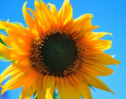 Yellow Multi Petaled Flower Closeup Photography Under Blue Sky during Daytime #38412