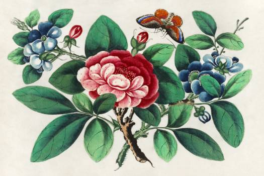 Chinese painting featuring flowers and butterfly (ca.1800–1899) from the Miriam and Ira D. Wallach Division of Art, Prints and Photographs: Art & Architecture Collection. Original from the New York Public Library.  #384282