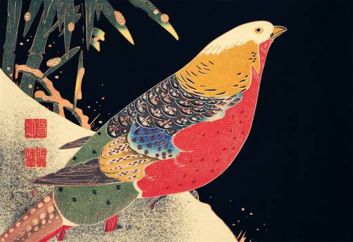Golden Pheasant in the Snow (ca. 1900) illustration by Ito Jakuchu. Original from The MET Museum.  Free Photo