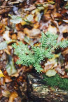 Tiny pine tree growing in the forest #384363