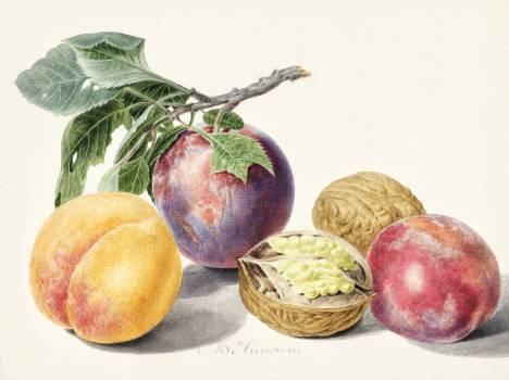 Fruits by Michiel van Huysum (1714-1760). Original from The Rijksmuseum.  #384396