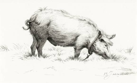 Standing pig in the grass (1805) by Jean Bernard (1775-1883). Original from The Rijksmuseum.  Free Photo