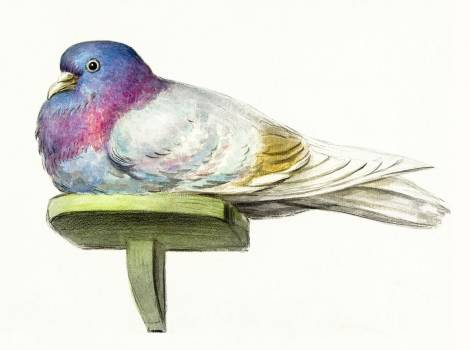 Pigeon sitting on a shelf (1802) by Jean Bernard (1775-1883). Original from The Rijksmuseum.  Free Photo