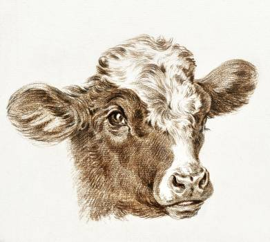 Head of a cow by Jean Bernard (1775-1883). Original from The Rijksmuseum.  #384448