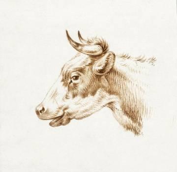 Head of a cow by Jean Bernard (1775-1883). Original from The Rijksmuseum.  #384450