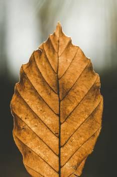 Brown leaf in Atzelsberg, Marloffstein, Germany Free Photo