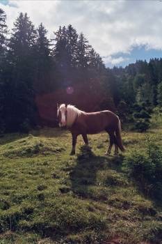 Horse surrounded by trees in Oberammergau, Germany Free Photo