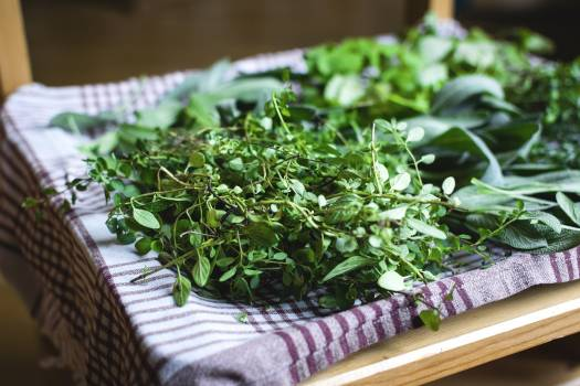 Variety of fresh herbs Free Photo