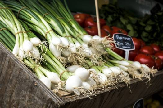 Spring onion Free Photo