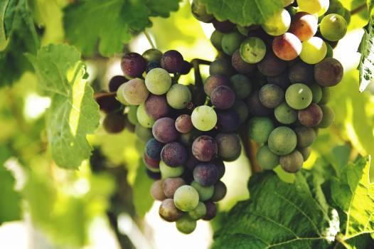 Grapes Fruit #38494