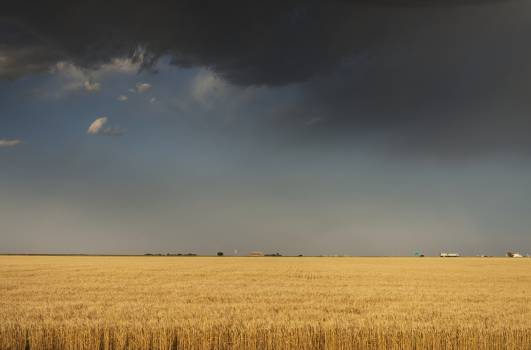 A perfectly flat wheatfield, worthy of western Kansas. Original image from Carol M. Highsmith's America, Library of Congress collection.  Free Photo