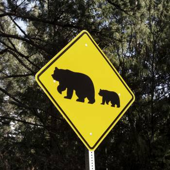One of what are fairly common bear-crossing signs in California's Sierra Mountains. Original image from Carol M. Highsmith's America, Library of Congress collection.  Free Photo