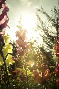 Blooming flowers in the summer #386152