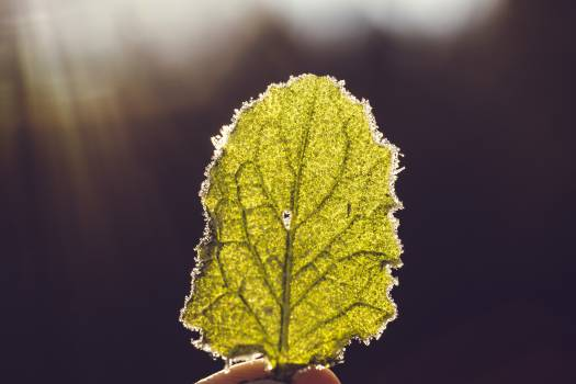 Yellow spring leaf #386282